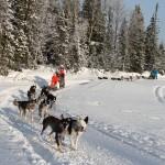 hundspannsturer i Åre