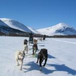 Hundspann i Åre